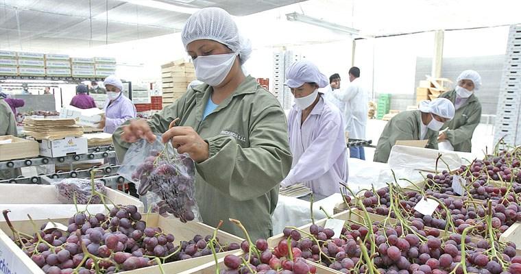 Perú reporta crecimiento de 7,2% en agroexportaciones de enero a noviembre